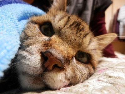 ご長寿猫みゃぶすけ