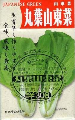 丸葉山東菜