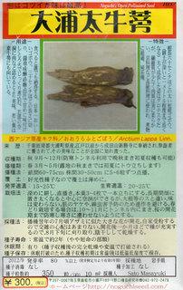 大浦太牛蒡種