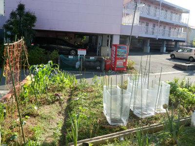 自然栽培畑